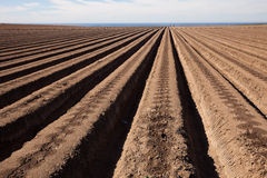 Agricultural field Stock Photos