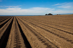 Agricultural field Stock Image