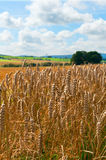 Agricultural Field Royalty Free Stock Photos