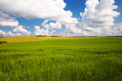 Agricultural field Stock Images