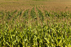 Free Agricultural Field Stock Photography - 42857442
