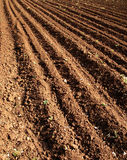 Agricultural field. In spring Stock Images
