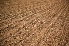 Agricultural field, Arable land soil. In the spring ready for the sowing season Royalty Free Stock Photography
