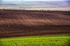 Agricultural field. Arable land in spring, ready Stock Image