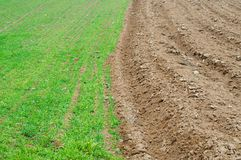 Agricultural field background Stock Photography
