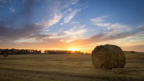 Agricultural field. Bales of hay to feed cattle in winter. royalty free stock images
