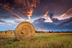 Agricultural field with bales at sunset. Stock Image