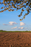 Agricultural field and blossoming pear tree Stock Images