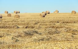 Agricultural field Royalty Free Stock Photo