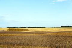 Agricultural field and blue sky Stock Photos