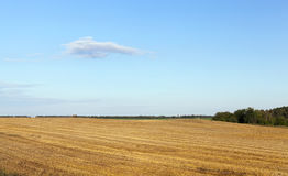 Agricultural field and blue sky Stock Image