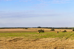 Agricultural field and blue sky Royalty Free Stock Image