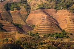 Agricultural field for corn cultivation. The landscape is on mountain in Chiang rai, Thailand Stock Images
