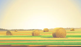 Agricultural field. Stock Photo