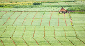 Agricultural field in the countryside Stock Photos