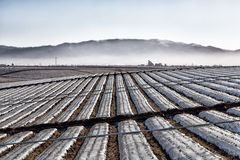 Agricultural Field Covered in Plastic Sheeting. Dormant Salinas Valley Agricultural Field Covered in Plastic Sheeting with Mountain Backdrop Royalty Free Stock Images