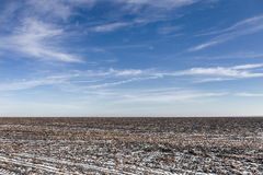 Agricultural field covered by snow. Harvested corn field covered with snow in the winter Stock Images