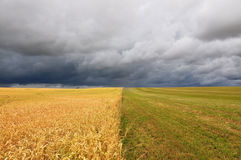 Agricultural field. Field divided in half into two parts . Sown crops and grass against the stormy sky Stock Image