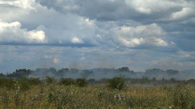 On the agricultural field dry grass burns. stock video footage
