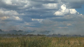 On the agricultural field dry grass burns. stock video