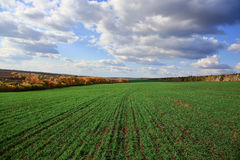 Agricultural field in Europe Stock Photography