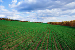 Agricultural field in Europe Stock Images