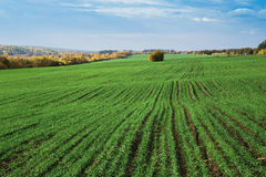 Agricultural field in Europe Royalty Free Stock Photos