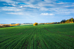 Agricultural field in Europe Royalty Free Stock Images