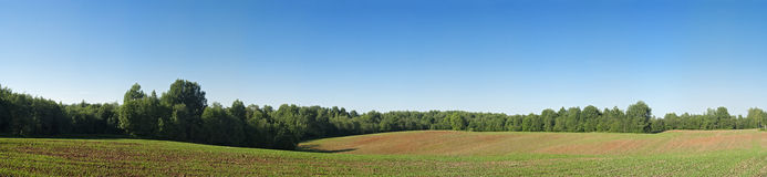 Agricultural field on a forest edge Stock Photo