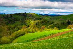 Agricultural field on a grassy hill. Beautiful rural scenery of Carpathian mountains on a cloudy day Stock Images