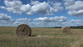 Agricultural field after the harvest of wheat stock footage