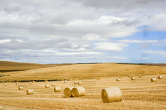 Agricultural field. Harvested yellow colored agricultural field with cloudy blue sky Royalty Free Stock Photography