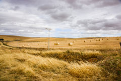 Agricultural field. Harvested yellow colored agricultural field with cloudy blue sky Stock Images