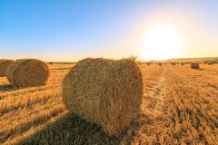 Agricultural field after harvesting wheat. Round of haystack on the background of blue sky and sunset Royalty Free Stock Photography