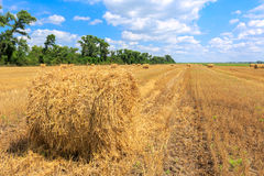 Agricultural field with hay rolls Stock Images