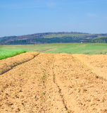 Agricultural field in the mountains. Brown soil of an agricultural field in the mountains royalty free stock image