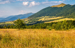 Agricultural field in mountains. Agricultural hay field in mountains. tree on the grassy meadow. beautiful rural landscape Stock Photography
