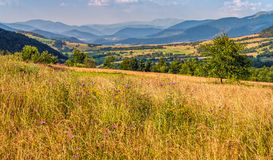 Agricultural field in mountains. Agricultural hay field in mountains. tree on the grassy meadow. beautiful rural landscape Stock Images