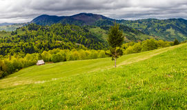 Agricultural field in mountains. Agricultural hay field in mountains. tree on the grassy meadow. beautiful rural landscape Stock Photos