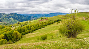 Agricultural field in mountains. Agricultural hay field in mountains. tree on the grassy meadow. beautiful rural landscape Royalty Free Stock Photo