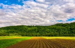 Agricultural field in mountains. Trees behind the grassy meadow. beautiful rural landscape at sunrise Stock Image