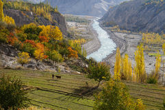 Agricultural field near Hunza Valley,Northern Pakistan Royalty Free Stock Photo