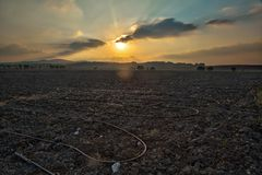 Sunset Over the Field. Agricultural field in the north of Israel at sunset Stock Photos