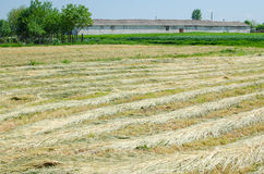 Agricultural field with old farm house Stock Photo
