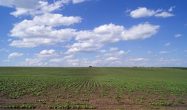 Agricultural field with plants Royalty Free Stock Images