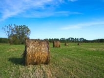 Agricultural field with Round Bales of hay to feed cattle in winter. Beautiful landscape, Agricultural field and Round bundles of dry grass in the field against royalty free stock image