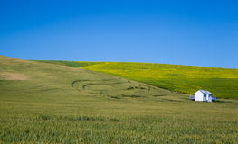 Agricultural field in rural area of Washington state Stock Photo