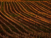 Agricultural field with side light background Royalty Free Stock Photography
