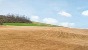 Agricultural field. With soil and blue sky Stock Photo