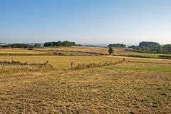 Agricultural field in Summer Stock Photo